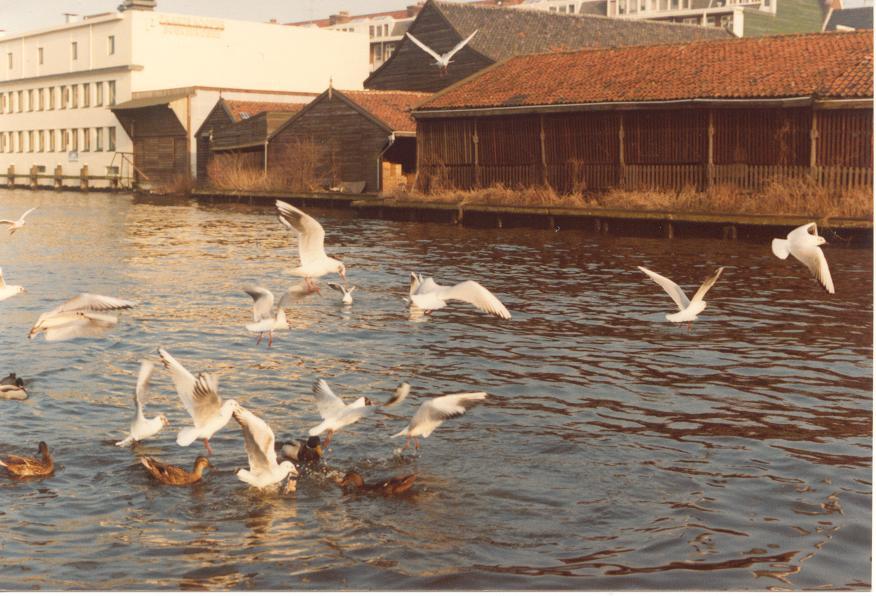 Birds in Amsterdam
